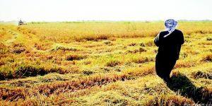 القطاع الزراعي في معشور يعاني من خسائر فادحة